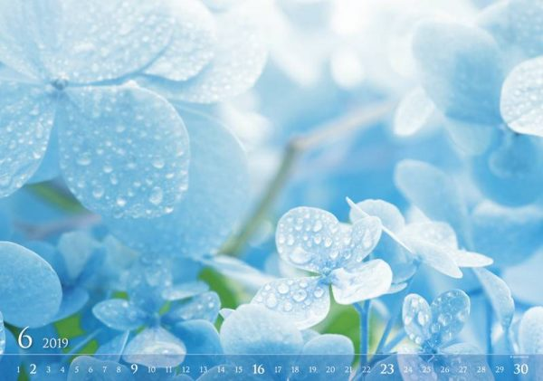 NK_Light_Blue.indd